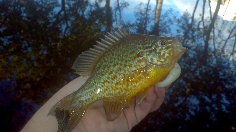 Votre pêche carna de Septembre 2011-017