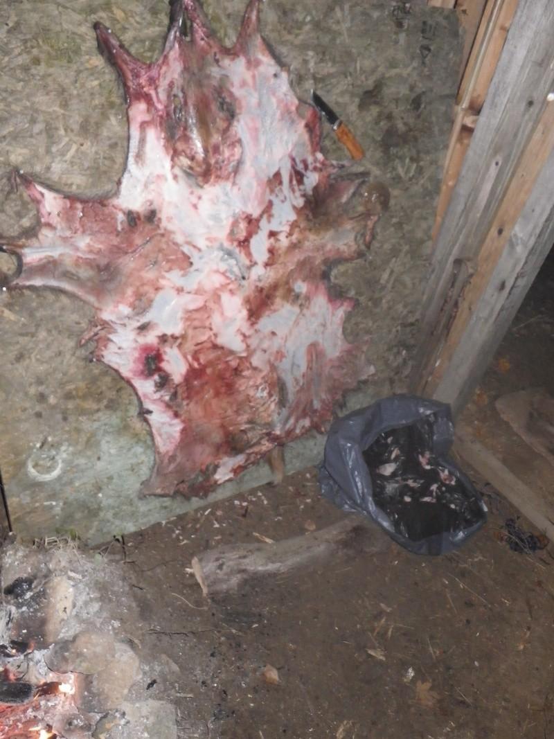 [tannage] demande de conseil pour peaux de sanglier, chevreuil ou lapin Imgp0410