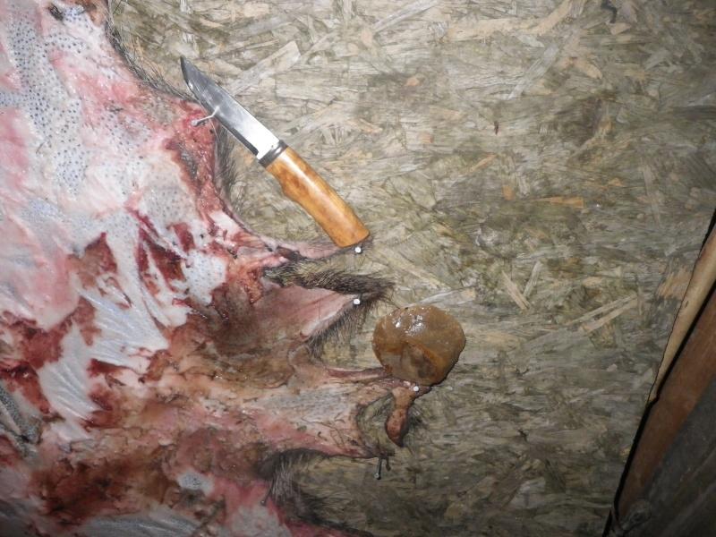 [tannage] demande de conseil pour peaux de sanglier, chevreuil ou lapin Imgp0411