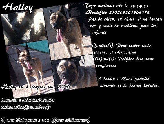 Halley X berger belge 2 ans sous BBD Halley13