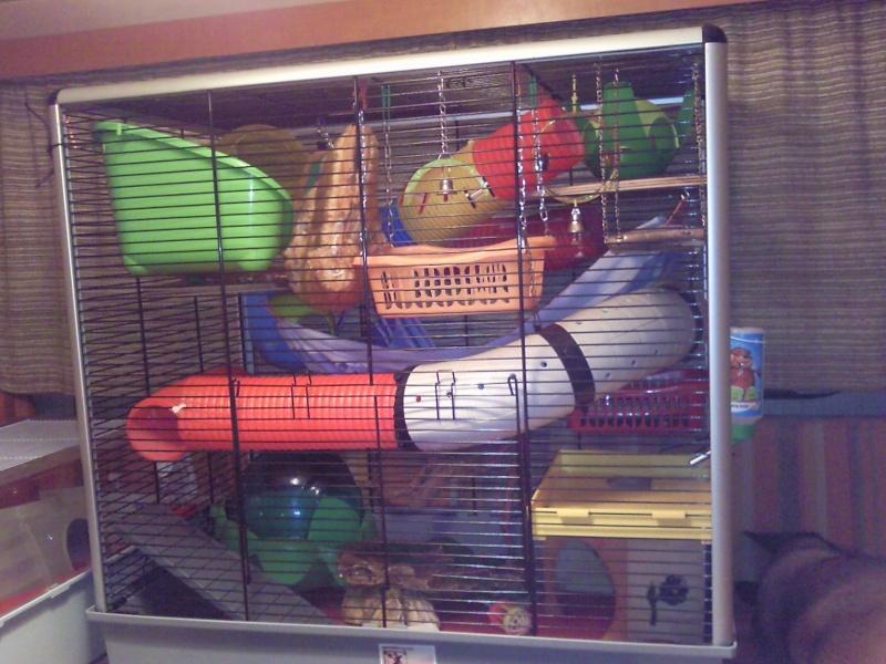 vends cage jenny kd Photo144