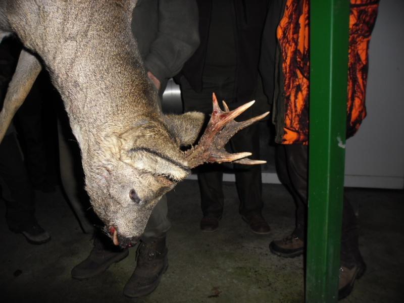 Saison de chasse au Grand Gibier 2012/2013 - Page 2 Sam_1521