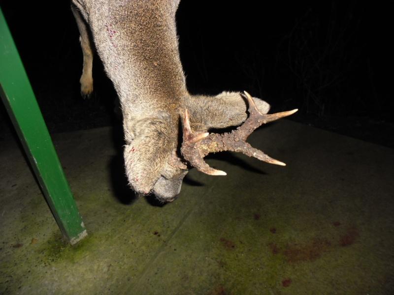 Saison de chasse au Grand Gibier 2012/2013 - Page 2 Sam_1613