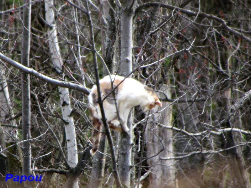 Gros minet, sur une branche perché... Papou333
