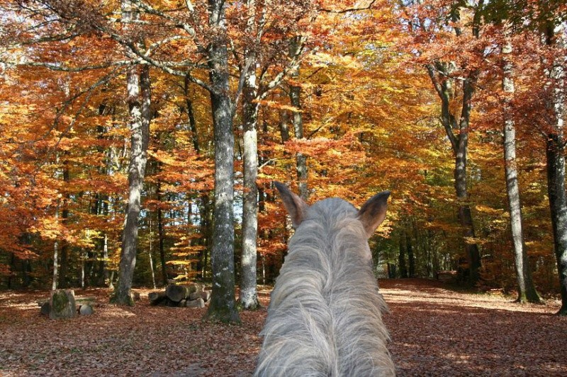 CONCOURS PHOTOS : L'automne Nov07_10