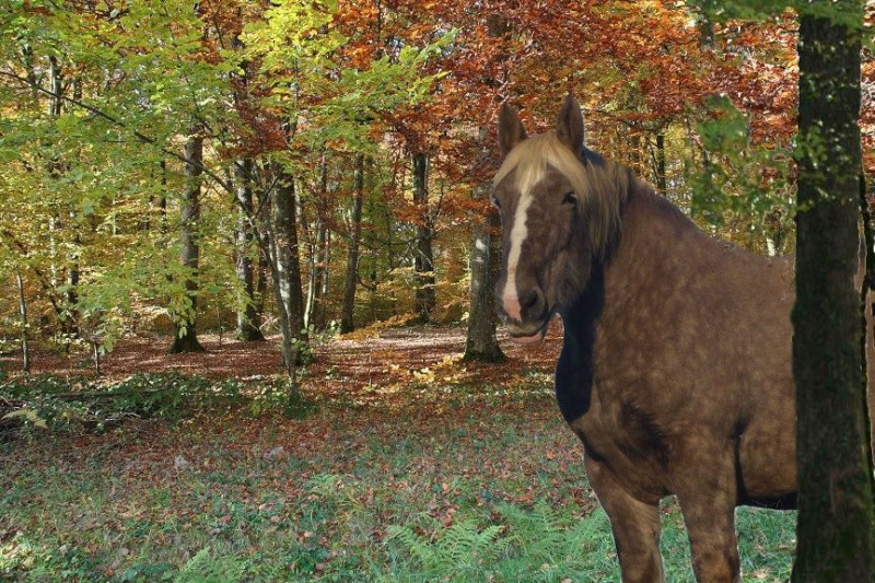 CONCOURS PHOTOS : L'automne Nov07_11
