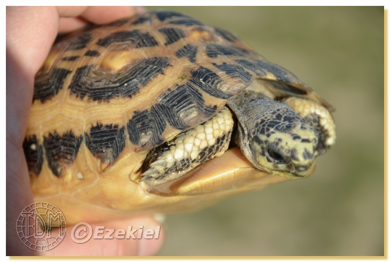 Regroupement photo: biotopes naturels & tortues sauvages  1anaka10