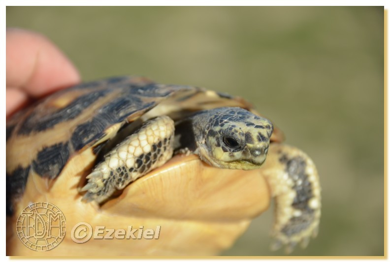 Regroupement photo: biotopes naturels & tortues sauvages  1anaka11