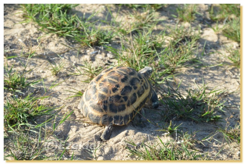 Regroupement photo: biotopes naturels & tortues sauvages  1anaka12