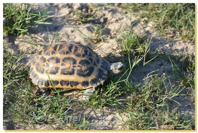 Regroupement photo: biotopes naturels & tortues sauvages  1anaka14