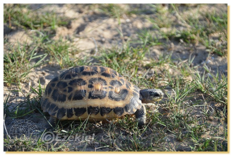 Regroupement photo: biotopes naturels & tortues sauvages  1anaka15
