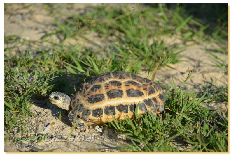 Regroupement photo: biotopes naturels & tortues sauvages  1anaka16
