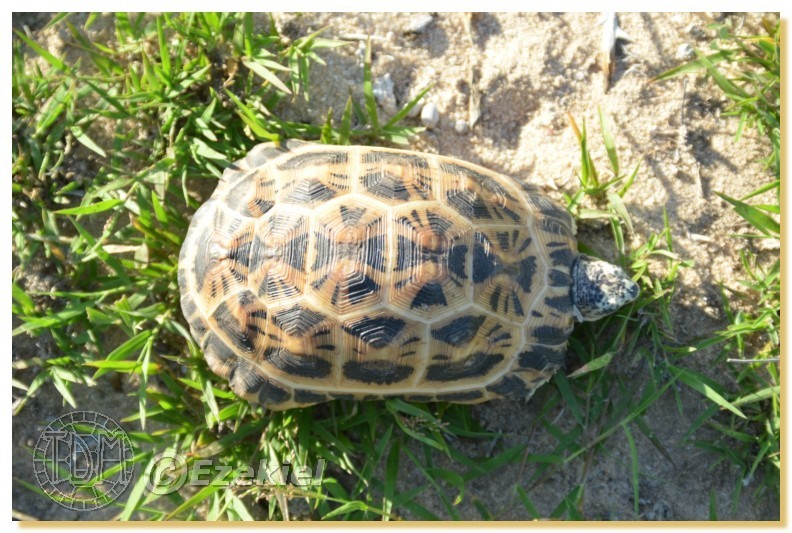 Regroupement photo: biotopes naturels & tortues sauvages  1anaka17