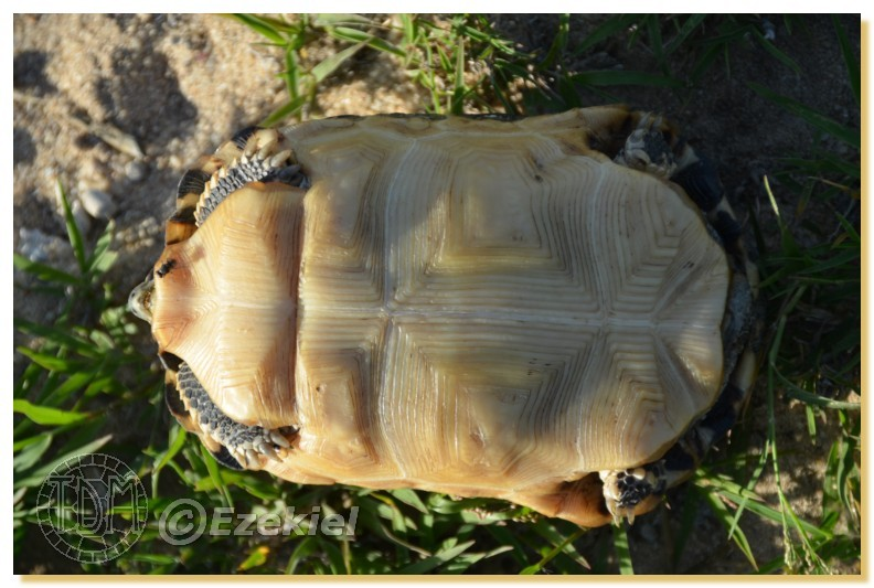 Regroupement photo: biotopes naturels & tortues sauvages  1anaka18