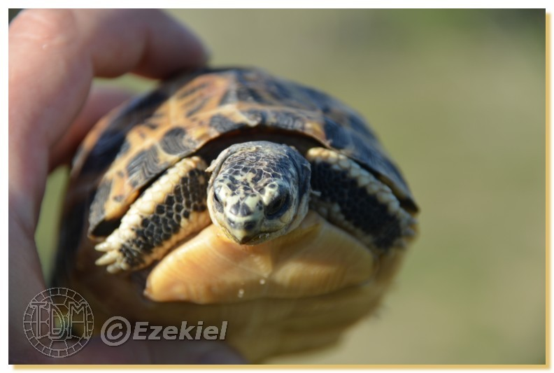 Regroupement photo: biotopes naturels & tortues sauvages  1anaka19