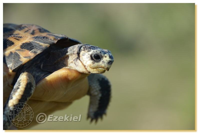 Regroupement photo: biotopes naturels & tortues sauvages  1anaka21