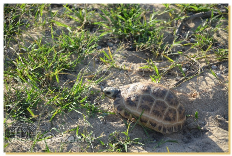 Regroupement photo: biotopes naturels & tortues sauvages  1anaka22