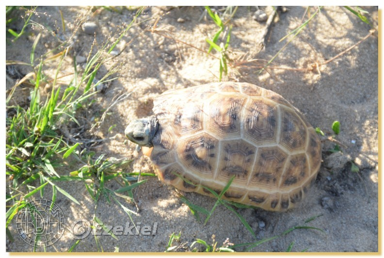 Regroupement photo: biotopes naturels & tortues sauvages  1anaka23