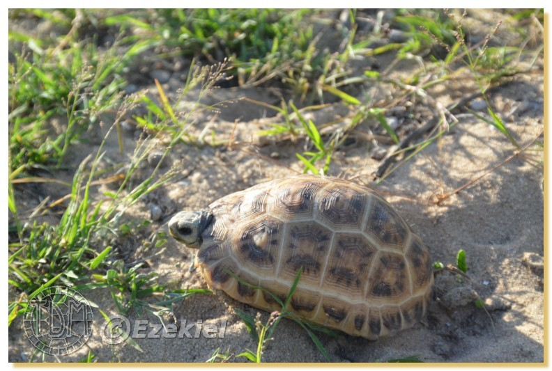 Regroupement photo: biotopes naturels & tortues sauvages  1anaka24
