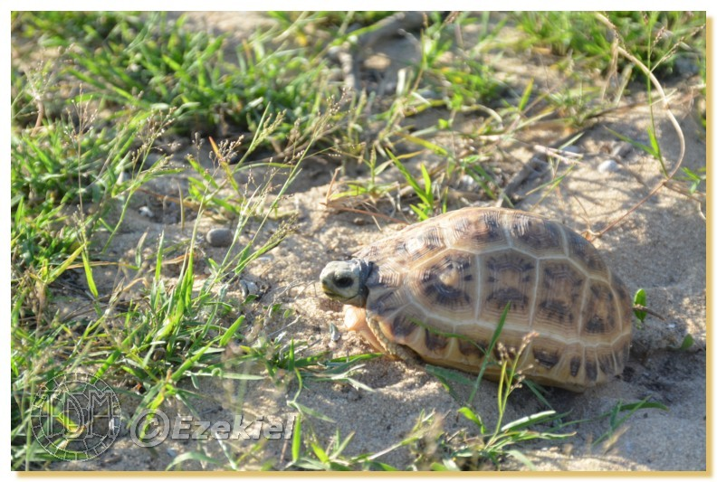 Regroupement photo: biotopes naturels & tortues sauvages  1anaka25