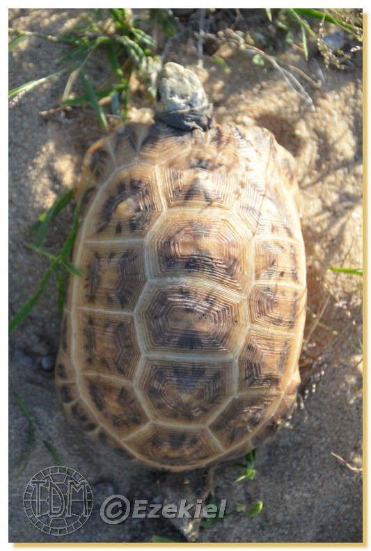 Regroupement photo: biotopes naturels & tortues sauvages  1anaka26