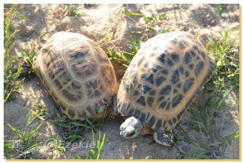 Regroupement photo: biotopes naturels & tortues sauvages  1anaka28