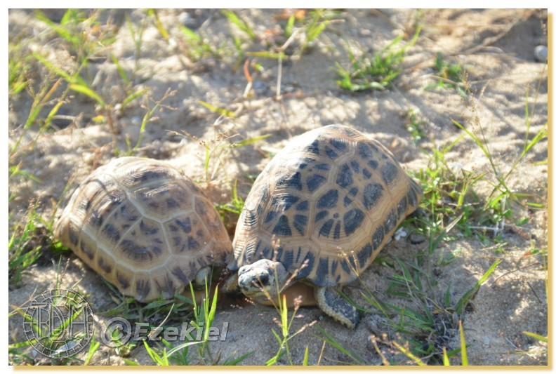 Regroupement photo: biotopes naturels & tortues sauvages  1anaka29