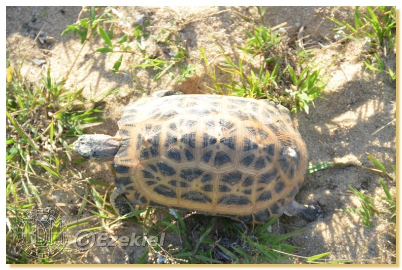 Regroupement photo: biotopes naturels & tortues sauvages  1anaka30