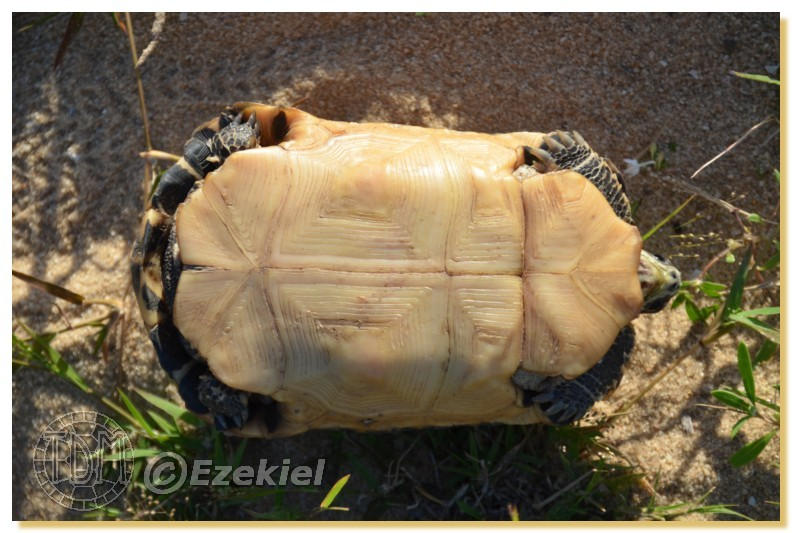 Regroupement photo: biotopes naturels & tortues sauvages  1anaka31