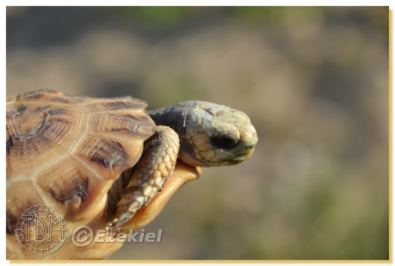 Regroupement photo: biotopes naturels & tortues sauvages  1anaka32