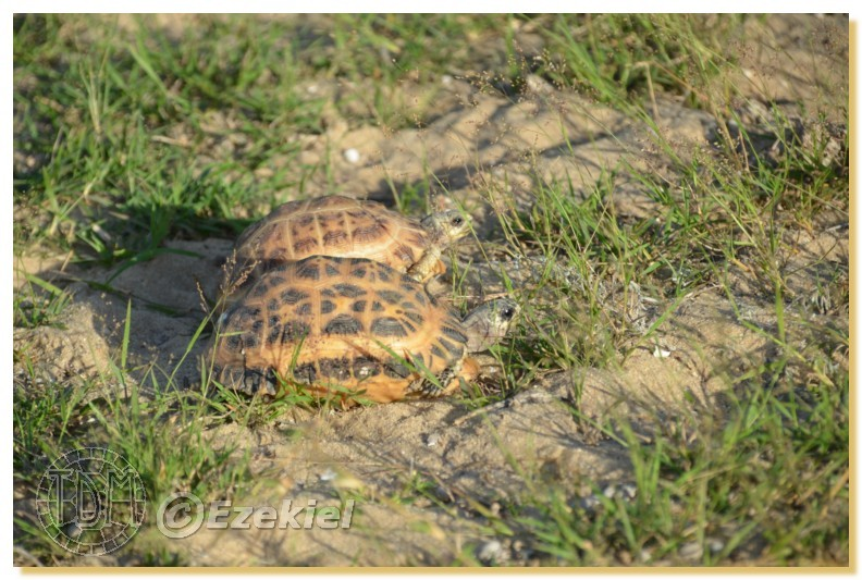 Regroupement photo: biotopes naturels & tortues sauvages  1anaka34