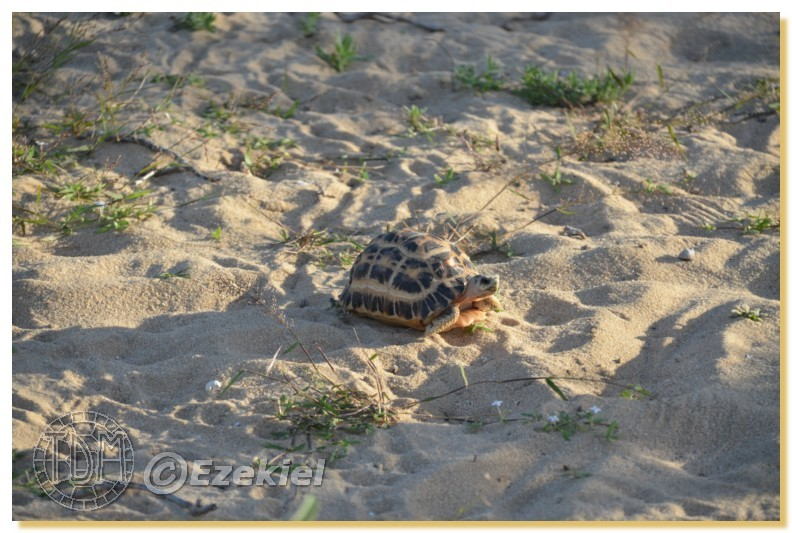 Regroupement photo: biotopes naturels & tortues sauvages  1anaka35