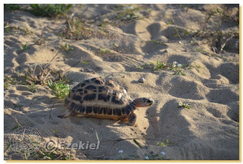 Regroupement photo: biotopes naturels & tortues sauvages  1anaka36