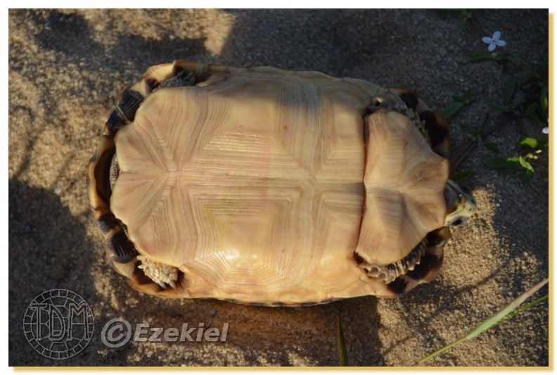 Regroupement photo: biotopes naturels & tortues sauvages  1anaka37