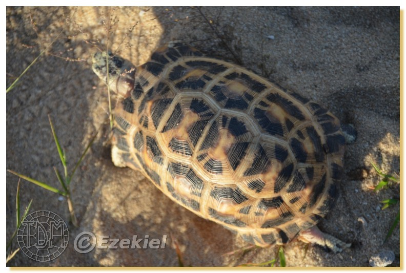 Regroupement photo: biotopes naturels & tortues sauvages  1anaka38
