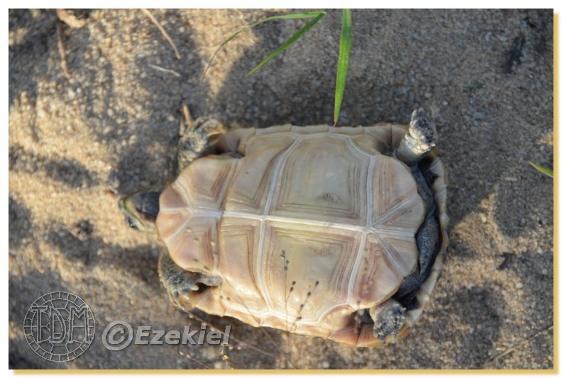 Regroupement photo: biotopes naturels & tortues sauvages  1anaka41
