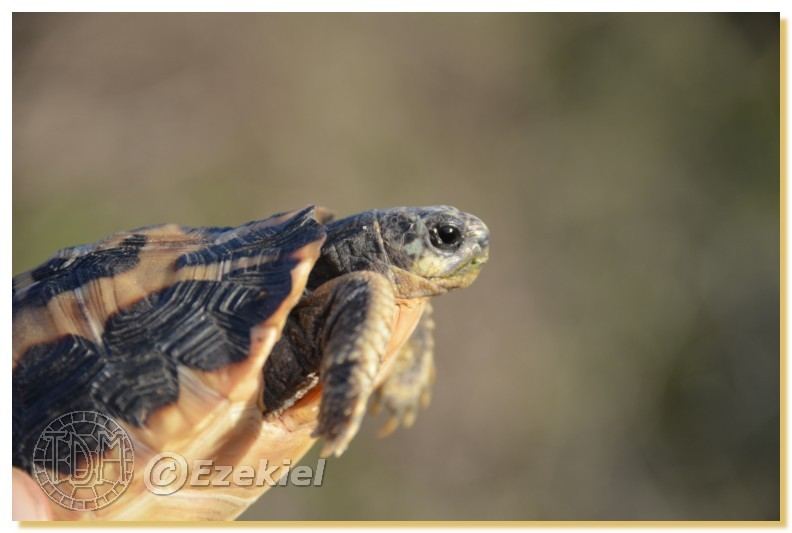 Regroupement photo: biotopes naturels & tortues sauvages  1anaka42