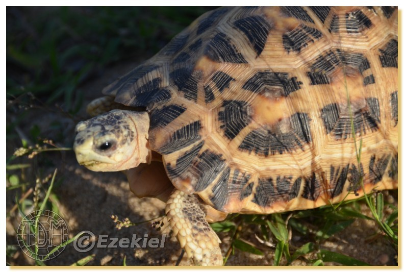 Regroupement photo: biotopes naturels & tortues sauvages  1anaka43