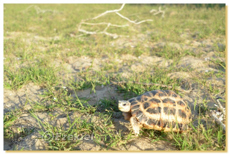 Regroupement photo: biotopes naturels & tortues sauvages  1anaka45