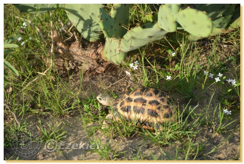 Regroupement photo: biotopes naturels & tortues sauvages  1anaka48
