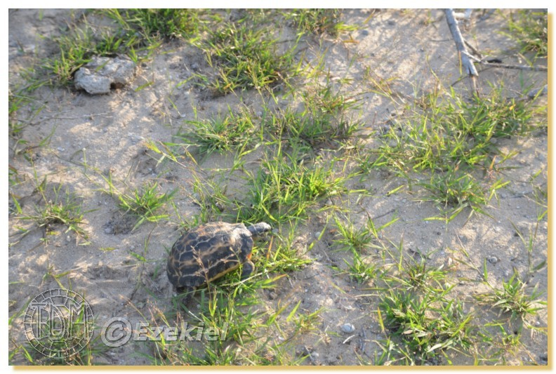 Regroupement photo: biotopes naturels & tortues sauvages  1anaka51