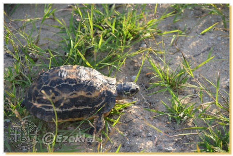 Regroupement photo: biotopes naturels & tortues sauvages  1anaka52