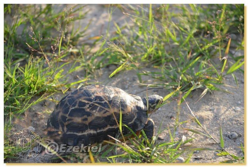 Regroupement photo: biotopes naturels & tortues sauvages  1anaka53