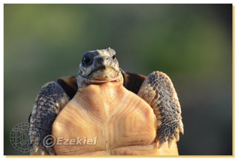 Regroupement photo: biotopes naturels & tortues sauvages  1anaka56