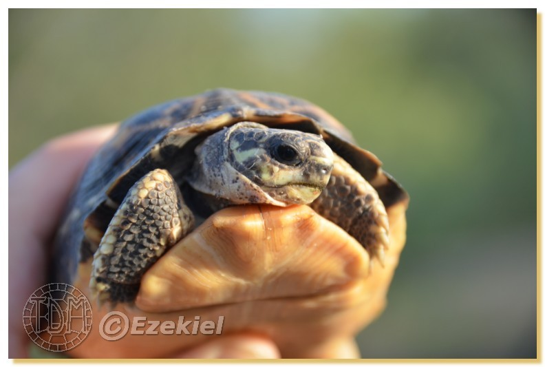 Regroupement photo: biotopes naturels & tortues sauvages  1anaka57
