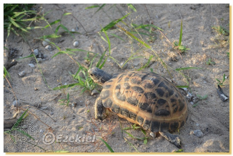 Regroupement photo: biotopes naturels & tortues sauvages  1anaka58