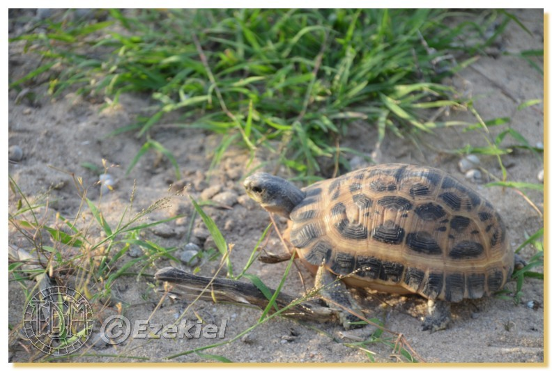 Regroupement photo: biotopes naturels & tortues sauvages  1anaka59