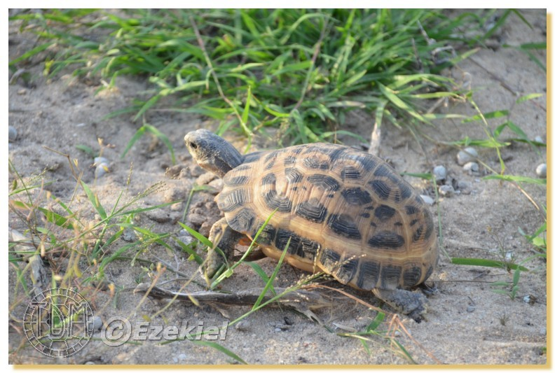 Regroupement photo: biotopes naturels & tortues sauvages  1anaka60