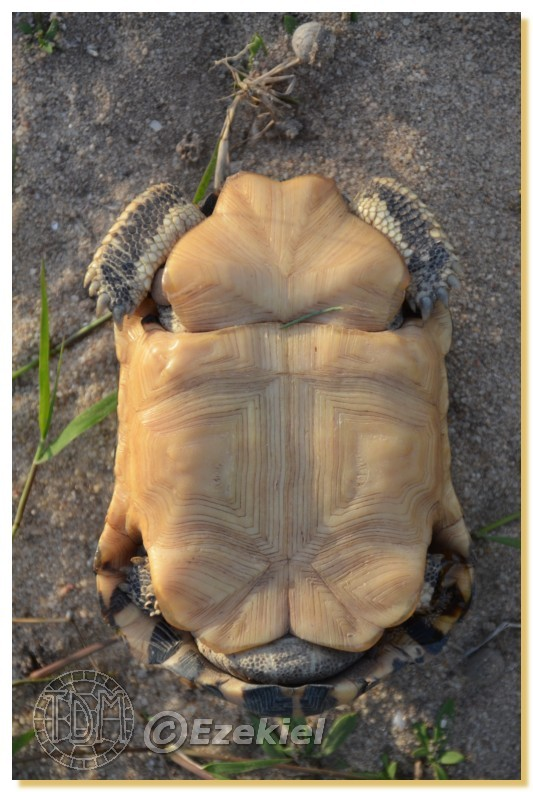 Regroupement photo: biotopes naturels & tortues sauvages  1anaka61