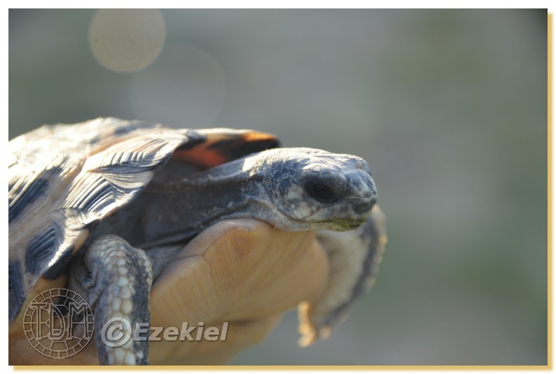 Regroupement photo: biotopes naturels & tortues sauvages  1anaka62